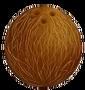 Coconut - Artwork