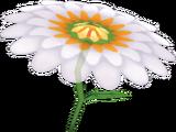 Aile fleurie