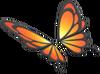 MKT Ailes de papillon orange