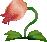 Bulb Bush