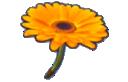 MK8 Sprite Blumengleiter