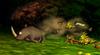DK64 Screenshot Rambi