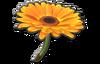 Aile Fleurie 8