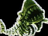 Requin squelette
