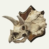 100px-SMO Triceratops Trophy Souvenir
