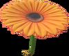 MKT Aile Fleurie