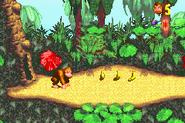 Start of Level - Jungle Hijinxs - Donkey Kong Country (GBA)