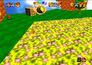 FlowerMeadows4