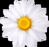 Daisy Shield - Mario Kart X