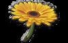 FlowerGliderMK8