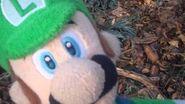 Luigi vs wild
