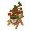 St plants strawberry