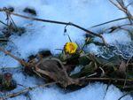 Kwiat Zwałka