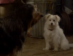 Buck and female dog