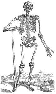 Skeleton-dug-his-own-grave