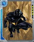 Black Leopard Black Panther