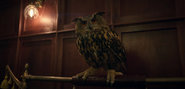Hooty the Owl Stargirl TV Series 0001