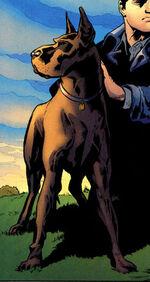 Titus the Dog 002