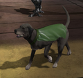 Wonder Dog DC Universe Online 001