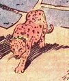 Merlin the Leopard (New Earth) 001