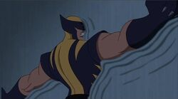 Wall Melts Wolverine WXM