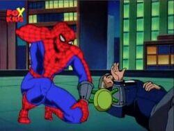 Spider-Man Rises After Tarantula Drop Off