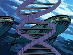 Humpback Whales DNA