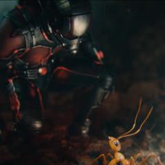 Lang explora el mundo de las hormigas.