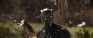 Black Panther (FallBack)