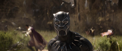 Black Panther (FallBack)