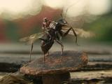 Ant-thony