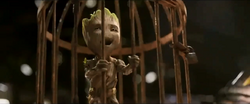 Groot cage