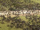 Batalla de Wakanda