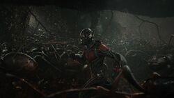Ant-Man promo 5
