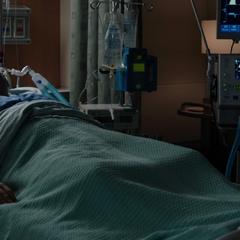 Hogan queda en coma por sus heridas.