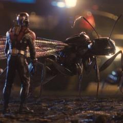 Lang a punto de montar a la hormiga carpintera #247.