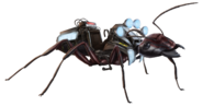Carpenter Ant FH