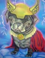 Thor pug