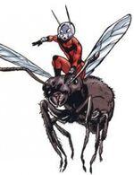 Ant-Man 429378