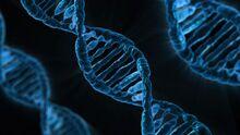 Mutatis mutandis DNA
