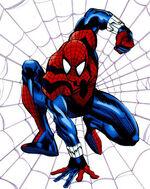 Spider 54321