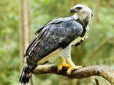 Harpy Eagles (Earth-7045)