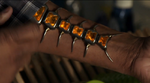 Centipede Device from Marvel's Agents of S.H.I.E.L.D. Season 1 1 0001