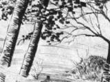 Fenwick Moor