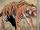 Bronson (Tiger) (Earth-616)