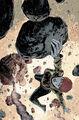 Ultimate Comics X-Men Vol 1 33 Textless.jpg