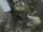 Chitauri from Marvel's The Avengers 0001.png