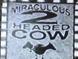 Miraculous 2 Headed Cow (Earth-TRN581)