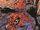 Peter Parker (Terra-772)