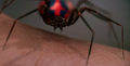 Radioactive Spider from Spider-Man (2002 film) 001